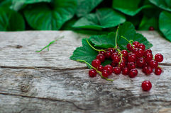 currants Imagem de Stock Royalty Free