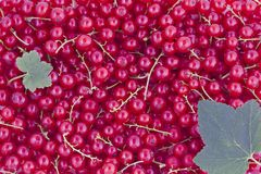 Currants background Royalty Free Stock Photography