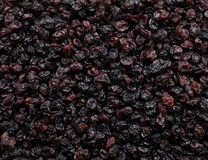 Currants background Stock Photography
