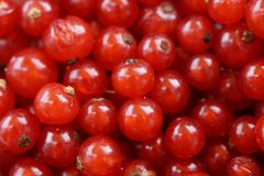 Currants, Berries, Fruit, Red Royalty Free Stock Images