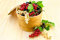 Currants in a birch tueske Royalty Free Stock Photography