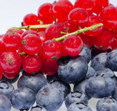 Currants and blueberries Royalty Free Stock Photo
