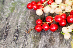 Currants, cherries and other summer fruits Stock Image