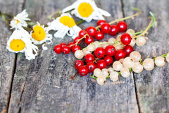 Currants, cherries and other summer fruits Royalty Free Stock Image