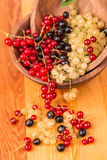 Currants different colors - red, black, white Stock Photos