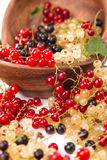 Currants different colors - red, black, white Stock Photography