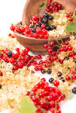 Currants different colors - red, black, white Stock Photo