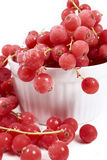 Currants, frozen in white bowl Royalty Free Stock Photo