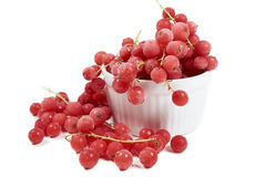 Currants, frozen in white bowl Royalty Free Stock Images