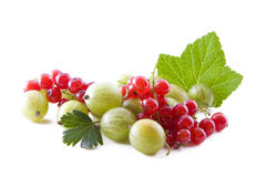 Currants and gooseberry Stock Image