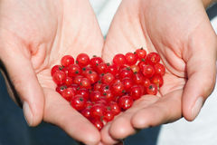 Currants in the hands. Hands holding currants in the shape of a heart Royalty Free Stock Image