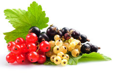 Currants isolated Royalty Free Stock Photos