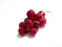 Currants. Isolated currants fruits on a white background Stock Photography