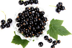 Free Currants Isolated In White Stock Photo - 2908800