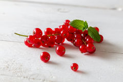Currants with mint leaf Stock Photography