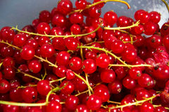 Currants. A photo of some currants Stock Photos