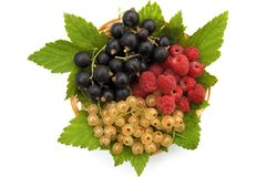 Currants and raspberries in the basket Royalty Free Stock Photography