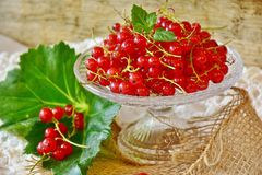 Currants, Red, Red Currant, Fruit Stock Photography