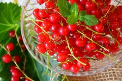Currants, Red, Red Currant, Fruit Stock Photo