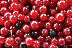 Currants. Red and some black currants close up Royalty Free Stock Image