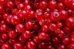 Currants. Ripe and sweet currants background Stock Photo
