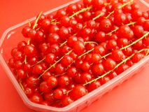 Currants. Some fresh red currants in a bowl Royalty Free Stock Images