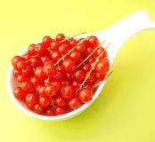 Currants. Some fresh red currants in a bowl Stock Photos