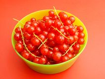 Currants. Some fresh red currants in a bowl Stock Image