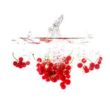Currants splash on water, isolated on white background. Stock Images