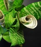 Currency of denomination of the dollar grows from the plant growing money