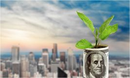 Currency Growth. Plant Cultivated Green Business Child Concepts Stock Image