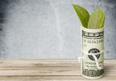 Currency Growth. Plant Green Paper Currency One Hundred Dollar Bill Rolled Up Color Image Royalty Free Stock Image