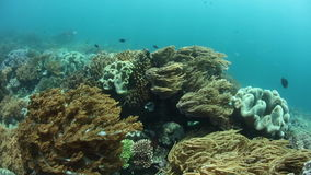 Current and Corals in Raja Ampat stock footage