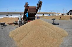 On the current mobile grain cleaning machine Stock Photo