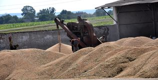 On the current mobile grain cleaning machine Royalty Free Stock Photo