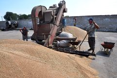 On the current mobile grain cleaning machine. Shmankivtsi - Ternopil - Ukraine - August 21, 2013 With the use of a mobile grain-cleaning machine, the `Parostok` Stock Photos