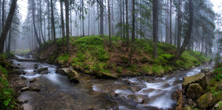 The current river the Prut in a fog Royalty Free Stock Photo