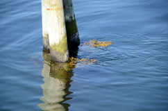 Current in the Water. Smaller whirlpools behind a pole in the water indicate that there is a current in the water, despite the calm water surface Royalty Free Stock Image