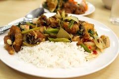 Curry över ris Arkivfoton
