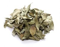 Curry leaf, indian spice Royalty Free Stock Images