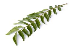 Curry Leaves Stock Photography