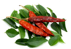 Curry leaves and dry red chilies Stock Photos