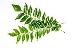 Curry leaves - karapincha (Murraya koenigii) Stock Photos