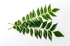 Curry leaves 2 - karapincha (Murraya koenigii) Royalty Free Stock Photography