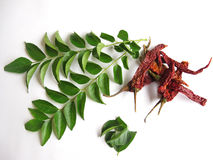 Curry leaves and red chillies. Dried red chillies and curry leaves isolated on white Stock Images