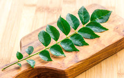 Curry Leaves on Wooden Board. Fresh curry leaves on wooden board. Aromatic curry leaves or Murraya koenigii, an important ingredient for Asian cuisine. A stick royalty free stock image