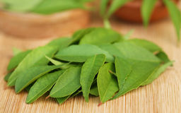Curry leaves Royalty Free Stock Images