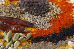 Curry spices side view royalty free stock photography