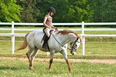 Curseur anglais sur le cheval Photo stock