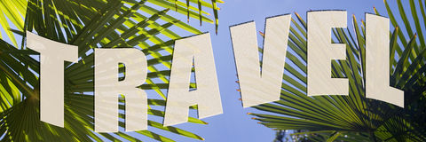 Curso às palmeiras Imagem de Stock